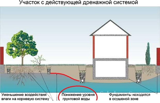 Дренаж участка с высокими грунтовыми водами