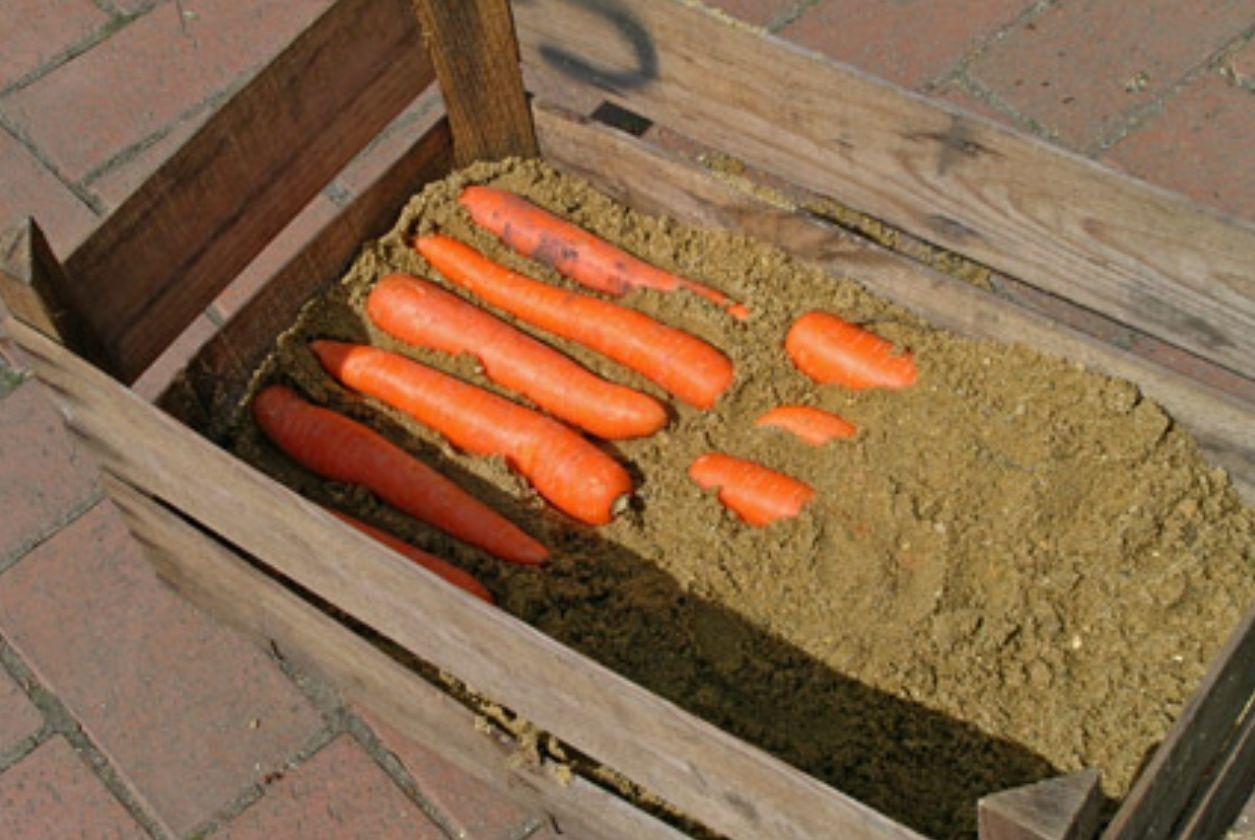 Как хранить морковь зимой в домашних условиях?