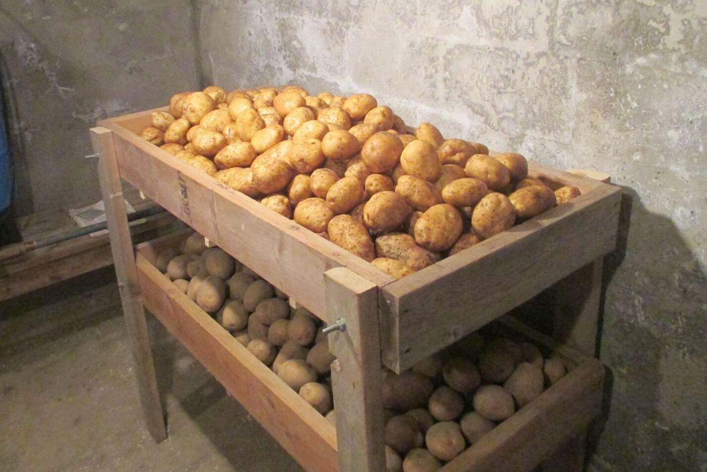Ящики в подвале своими руками под картошку фото 799