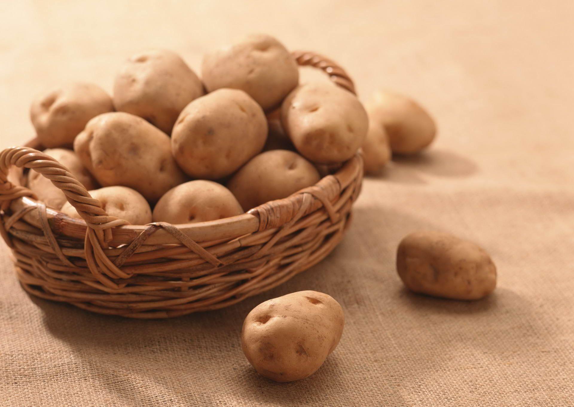 Правила хранения картофеля в погребе и квартире