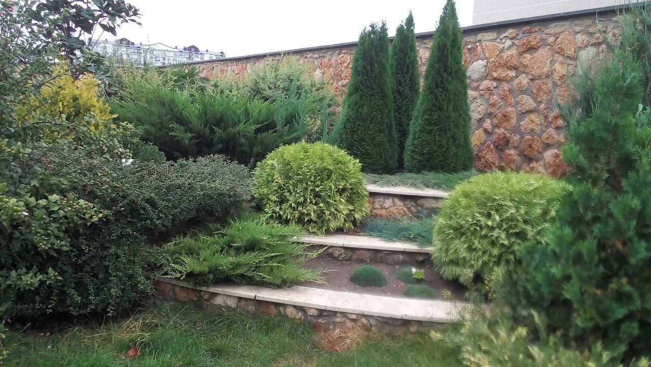 Как вырастить кедр на приусадебном участке?