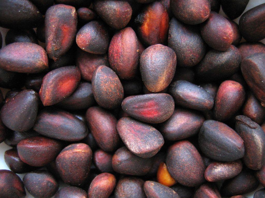Когда собирают кедровые орехи и как их хранить правильно?
