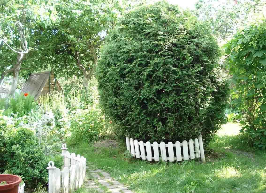 Обрезка туи — как и когда правильно обрезать растение?