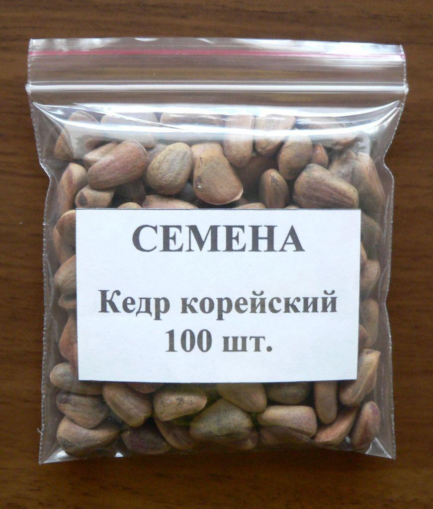 Как можно вырастить кедр из орешка в домашних условиях?