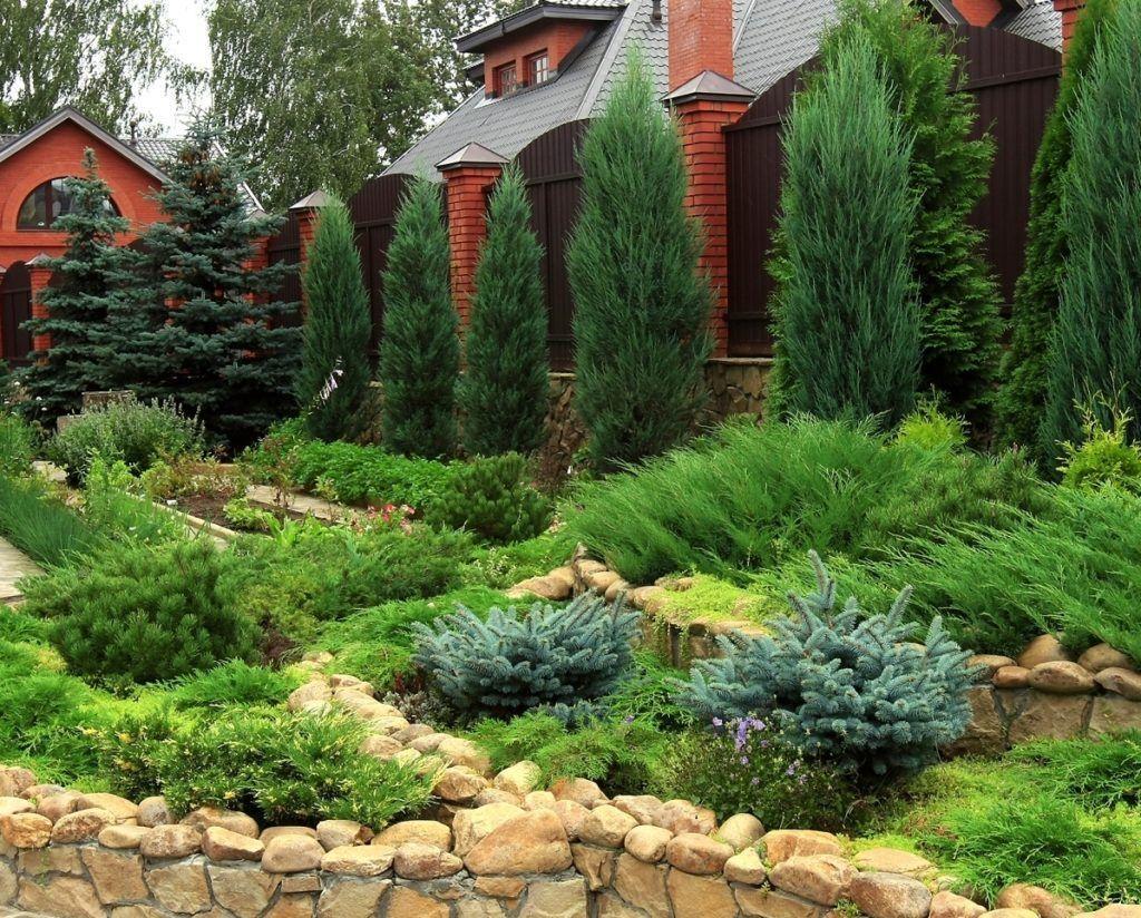 Лучшие тенелюбивые хвойники для сада