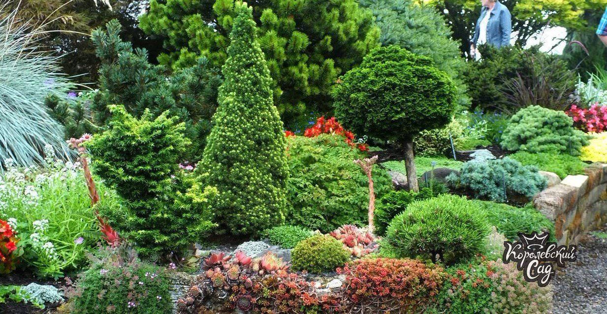 Как красиво посадить тую на дачном участке, фото в ландшафтном дизайне