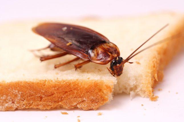 Как уничтожить тараканов в квартире, все доступные способы