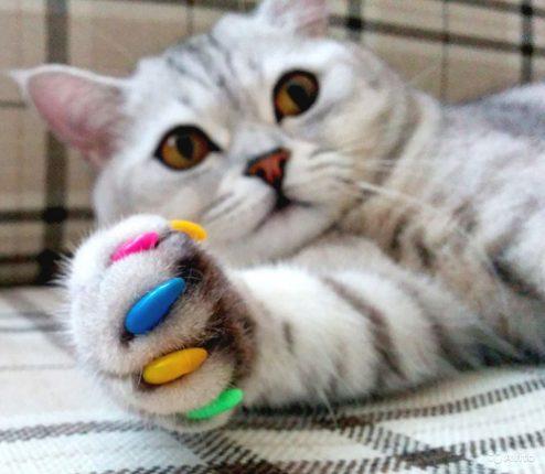 Как отучить кошку точить когти об обои, 6 простых советов