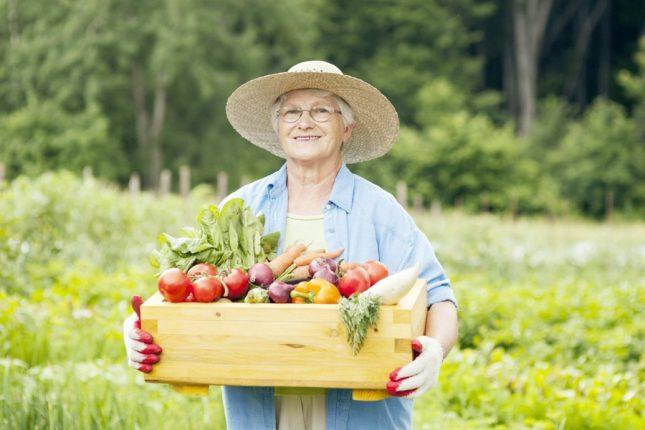 Тест: Вы хороший садовод или дачник-любитель?