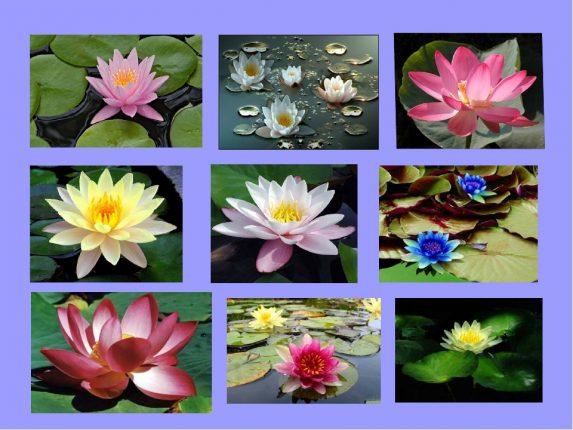 Тест: Выберите цветок и узнайте ваш тип личности