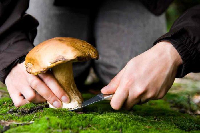 съедобные грибы волгоградской области фото