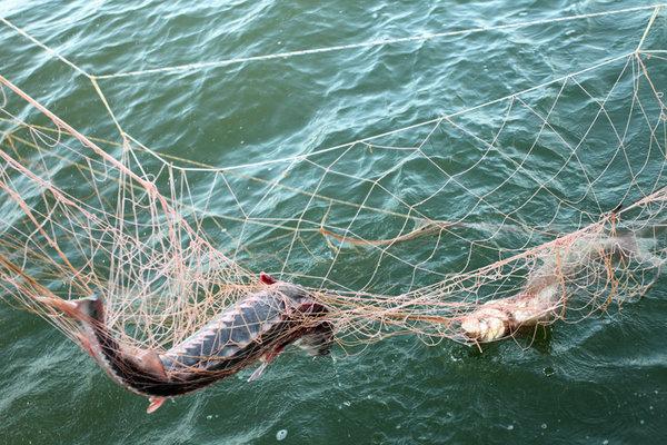 Как плести сеть из веревки, лески в домашних условиях?