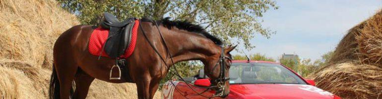 Как сделать седло для лошади и из чего оно состоит