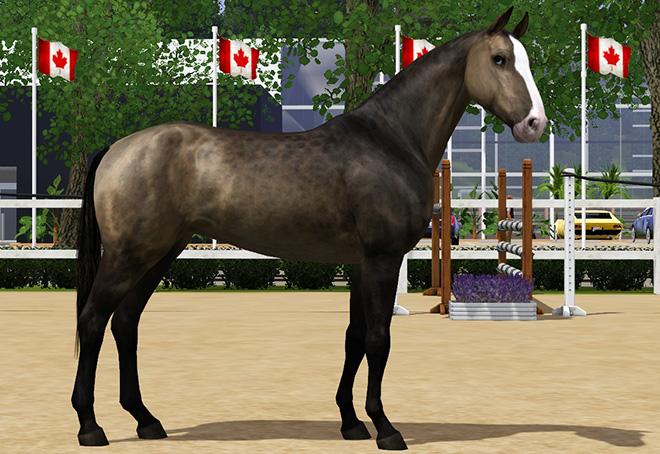 Какая лошадь – самая быстрая в мире