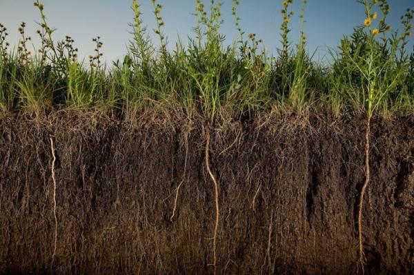 Плодородие почвы: виды, оценка, способы восстановления и повышения