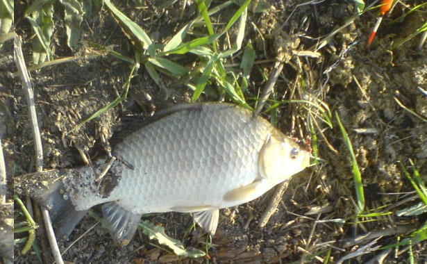 Рыбалка на карася в августе