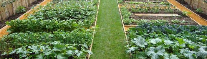 длина грядок на огороде